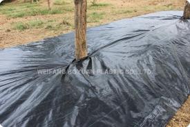 果园防草布除草应用