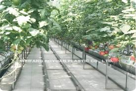 无土栽培白色地布园艺地布应用