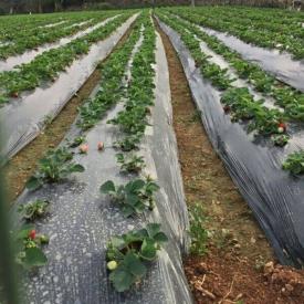 盘点果园遮盖除草方法:草帘子地膜无纺布防草布
